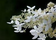 昆虫が花に集まる理由 - 丹馬のきょうの1枚