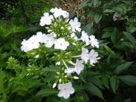 夏の庭 - 花の自由旋律