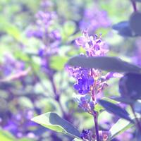 海の紫野  - 三恵 poem  art