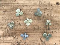紫陽花のドライフラワー - sakurairo