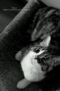 瞳に性格が表れる… - 猫花雑記
