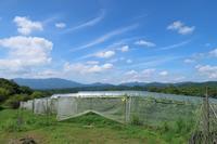 夏本番 - 葡萄と田舎時間