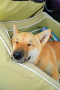 ヒトコマ写真(56) - 結局ただの犬バカです。