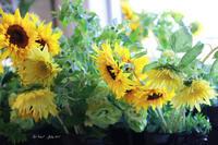 ひまわりパワー - Le vase*  diary 横浜元町の花教室