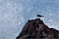 海鳥 - muku3のフォトスケッチ