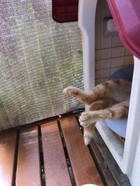 暑中お見舞い(*^^*)/ - やさしい時間