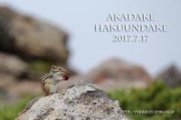 銀泉台~白雲岳 2017夏【 雲の中の楽園散歩 】№2 - あ~した天気になぁ~れ♪