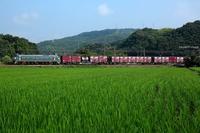 緑の稲と。 - 山陽路を往く列車たち