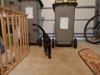 小黒猫、無事確保! - 『ココんちの(3+1)+1+1猫と一犬のたわごと』 (2+1)+1+1 Pitchouns et 2 Pitchounettes
