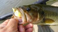7月の釣り - 店主のマニアック日記