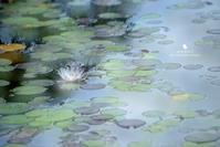 ヒンヤリ - お花びより