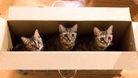 麦ニャンズ、一つの箱に集合 - 猫と夕焼け