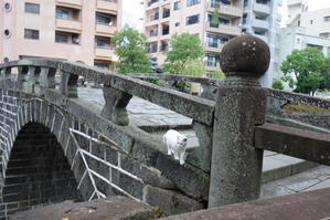 のらマニア ~長崎ぶらぶら猫~