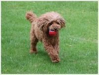 お留守番の後は、お庭でボール追いかけっこ~若い大は元気だわwww~ - さくらおばちゃんの趣味悠遊