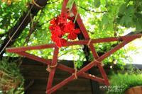 赤い花と五芒星 - ある日の足跡