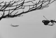 荒涼 - 南の島の飛行機日記