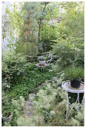 夏の庭 - natu     * 素敵なナチュラルガーデンから~*     福岡でガーデンデザイン、庭造り、外構工事をしてます