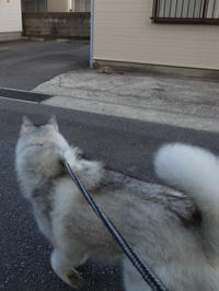 むかしむかし・・・(*^_^*) - 犬連れへんろ*二人と一匹のはなし*
