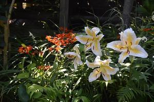 7月04-12日の庭。 - 雑木林の家から-nishio