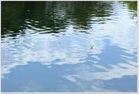 暑い一日 (フォト雑記) - ハチミツの海を渡る風の音
