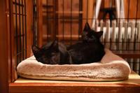 めざせ黒猫マスターへの道 その1  - りきの毎日