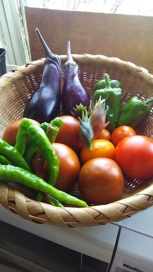 今年の夏野菜 -