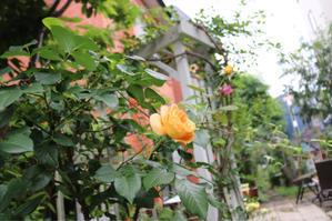 もう少しで夏休みだね? - kekukoの薔薇の庭
