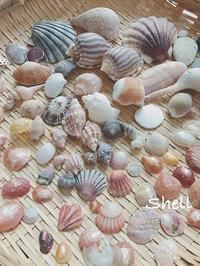 貝殻 - on the shore