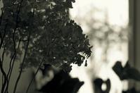 untitled - larywa