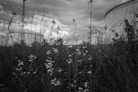 不安定な空を仰ぐ夏草 - Film&Gasoline