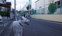岸谷小学校にて - 小太郎の白っぽい世界