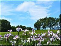 花菖蒲園(八紘学園) - 北海道photo一撮り旅