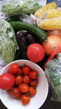 父の有機栽培畑より夏野菜タップリ - 鎌倉fonteの日常