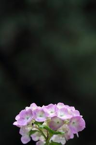 花束 - 日記のような写真を