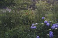 拝啓 森の花畑の守人様 三十七 - 向こうの谷に暮らしながら