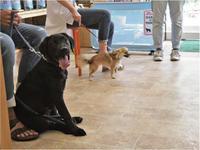 今週の犬のしつけ方教室 - SUPER DOGS blog