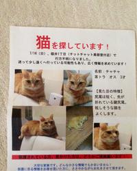 迷い猫か - 音作衛門道楽日記