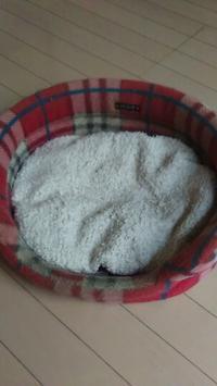 ミーコのベットクッションを洗って。 - La Pousse(ラプス) フラワーアレンジメント教室