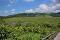 霧ヶ峰のニッコウキスゲ (撮影日:2017/7/19) - toshiさんの気まぐれフォトブログ