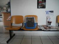 ちび太(仮名)、診察していただきました。 - 『ココんちの(3+1)+1+1猫と一犬のたわごと』 (2+1)+1+1 Pitchouns et 2 Pitchounettes