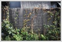 千住散歩 -648 - Camellia-shige Gallery 2
