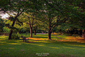 西陽の当たる公園 - 君に届け