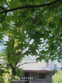 NEST INN HAKONE ネストイン箱根 3 - Favorite place  - cafe hopping -