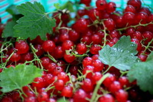 真っ赤なジャム作り - 花ときどき十七音