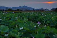 橿原市 西(二上山)より北(耳成山)が焼けた - ぶらり記録(写真) 奈良・大阪・・・