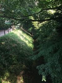 通船堀のほとりから 7月 - 造形+自然の教室  にじいろたまご
