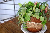 グリーンの寄せ植え - mon dimanche blog