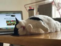 引きこもり生活継続中 - 五十路半ば、猫と暮らしと旅日記