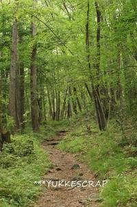 八ヶ岳 森さんぽ ~三分の一湧き水から棒道へ~ - YUKKESCRAP