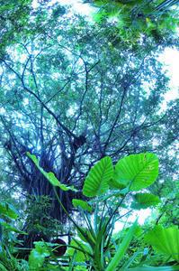 大暑 第34候 桐の花、実を結ぶ - Wind Tribe Story